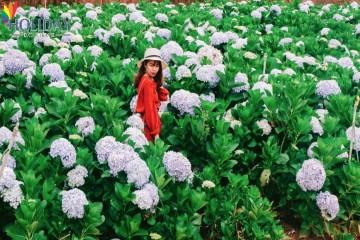 TOUR LANGBIANG-DATANLA-THUNG LŨNG VÀNG